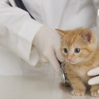 Discover a Career as a Veterinary Assistant